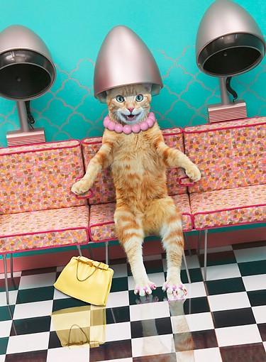 Кот в салоне красоты