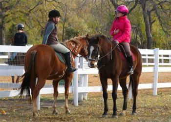 Пони-клуб: конный спорт и общение для детей и взрослых